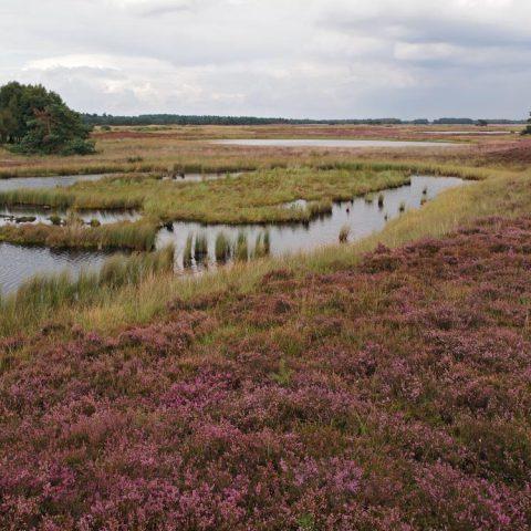 Groepshuis bij de uitgestrekte heidevelden van het Hijkerveld in hartje Drenthe.
