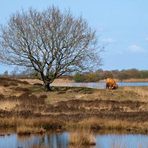 Logeren in het Hiekerhoes en genieten van de Drentse natuur op het Hijkerveld.