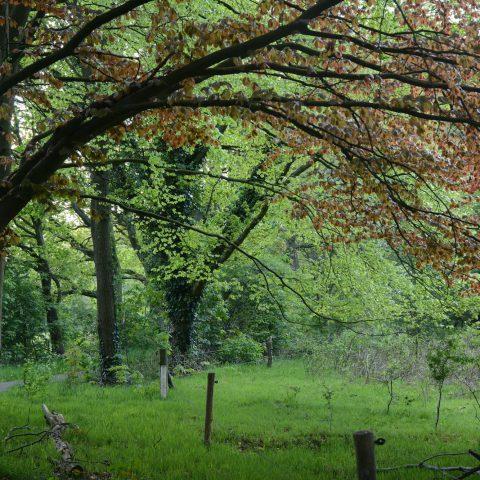 Vanaf het Hiekerhoes in Drenthe loop je zo het bos in en de uitgestrekte heidevelden van het Hijkerveld op.