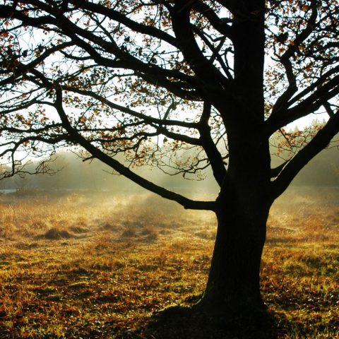 Genieten van de natuur tijdens verblijf in het Hiekerhoes in hartje Drenthe.