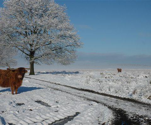 Logeren in groepsaccommodatie het Hiekerhoes en genieten van Drenthe in de winter.