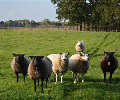 Genieten van het Drentse platteland tijdens een weekendje weg in het Hiekerhoes in Drenthe.
