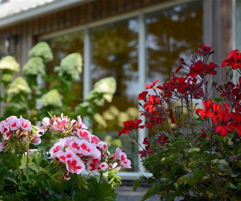 Familieweekend of vriendenweekend in Drenthe in groepsaccommodatie met ruime tuin.