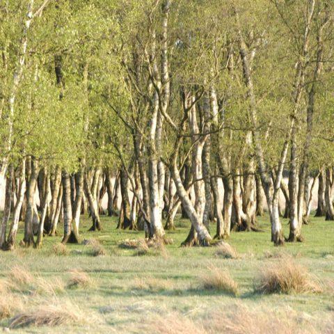 Vergaderruimte Hiekerhoes bij het Hijkerveld in hartje Drenthe.